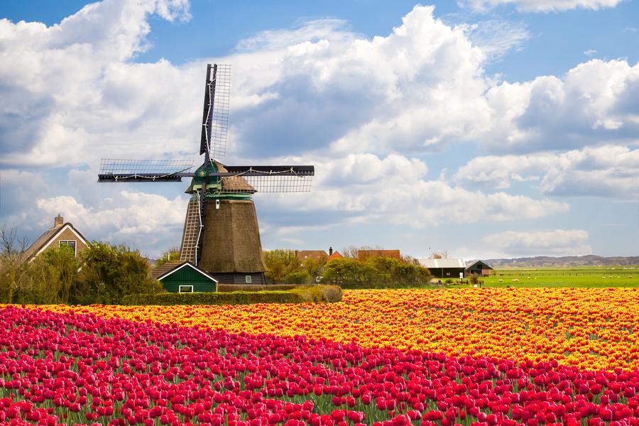 Tulpen ik hou van holland quiz