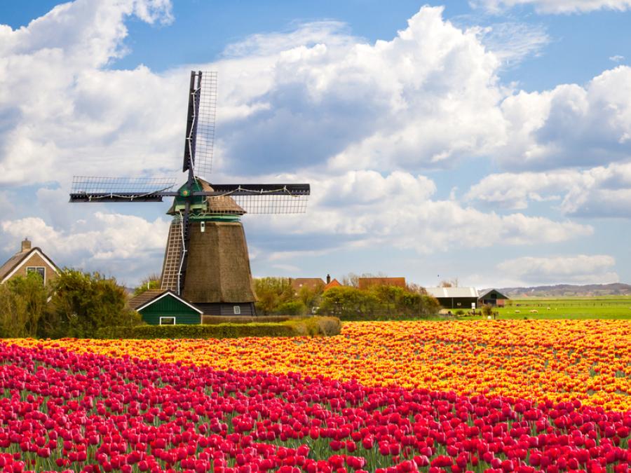 Ik hou van holland tulpen
