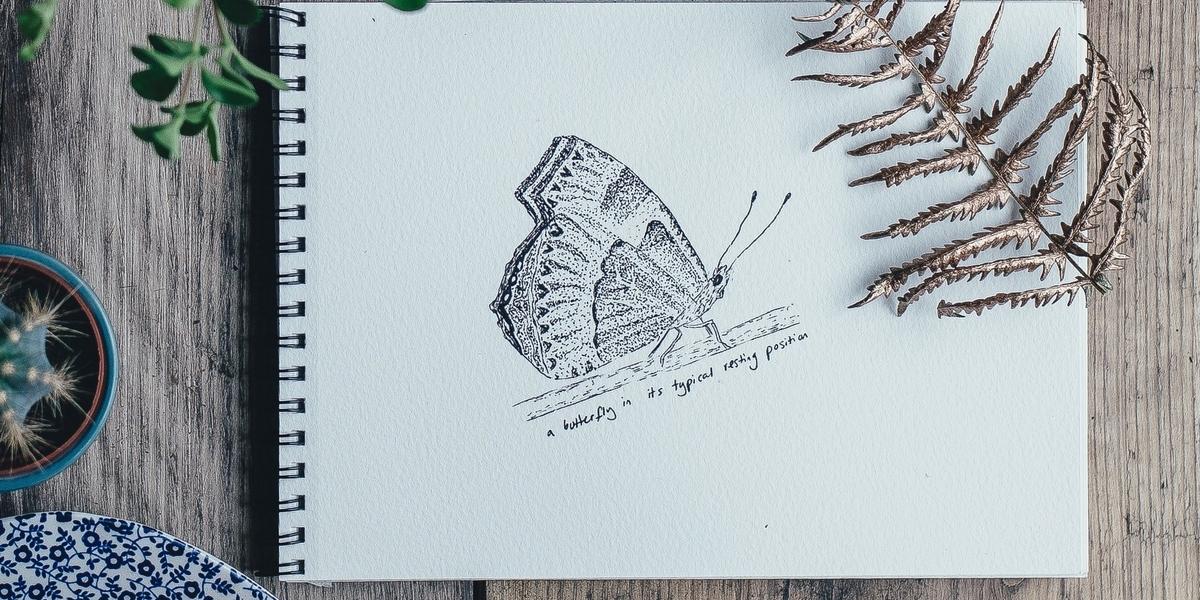 Schetsboek Vlinder