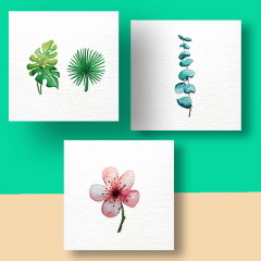 Aquarel Compilatie Botanisch