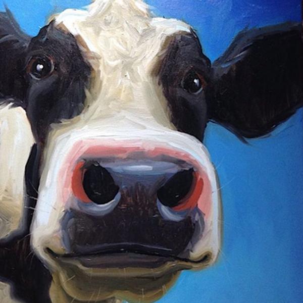 Dieren Koddige Koe