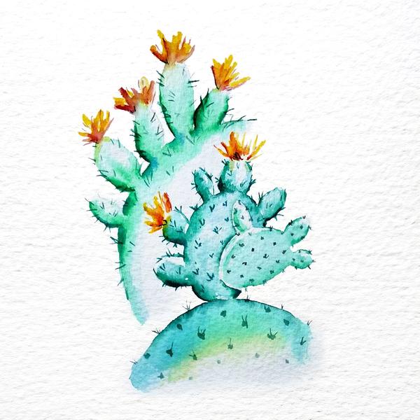 Cactus aquarel