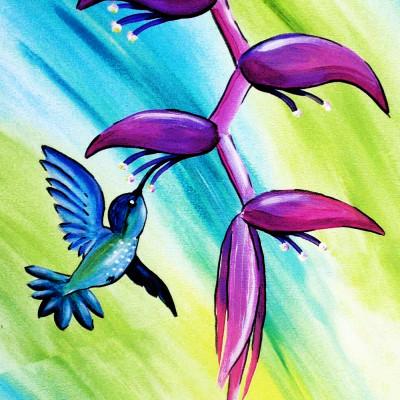 Dieren Kolibrie